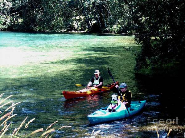Photograph - Kayaking With The Dog by Delores Malcomson