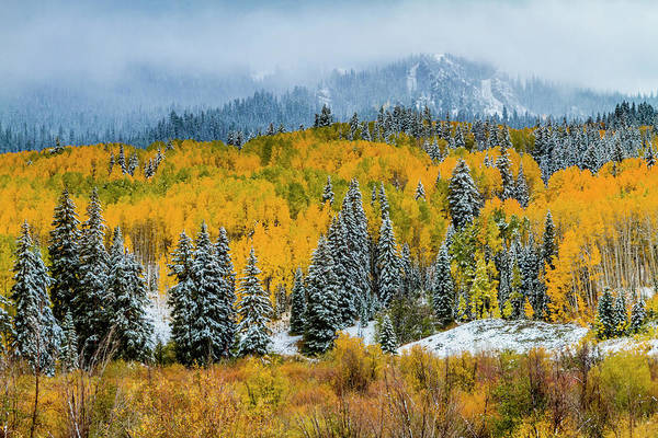 Photograph - Kebler Pass Fall Color In The Snow by Teri Virbickis