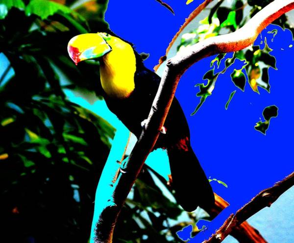 Keel-billed Toucan Photograph - Keel.billed Toucan by Anand Swaroop Manchiraju
