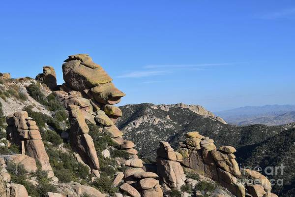 Coronado National Forest Photograph - Keep A Stiff Upper Lip by Janet Marie