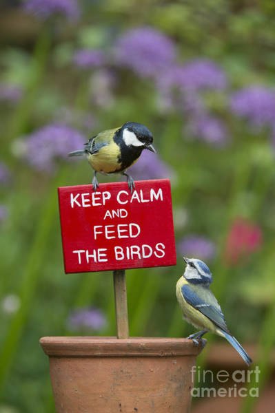 Tit Photograph - Keep Calm And Feed The Birds by Tim Gainey