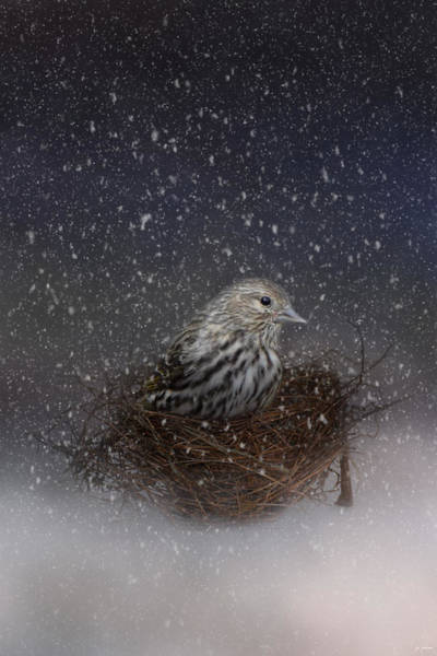 Photograph - Keeping Warm In My Nest by Jai Johnson