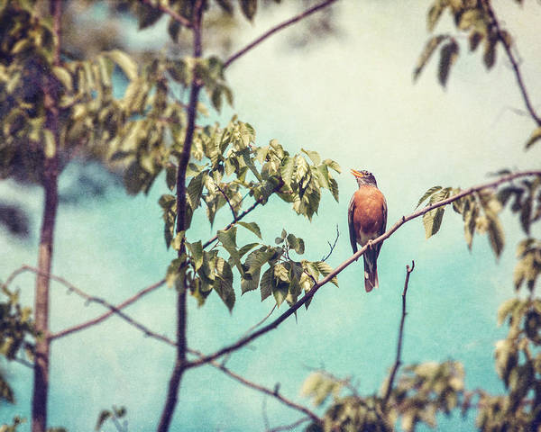 Robin Egg Blue Photograph - Keeping Watch by Lisa Russo