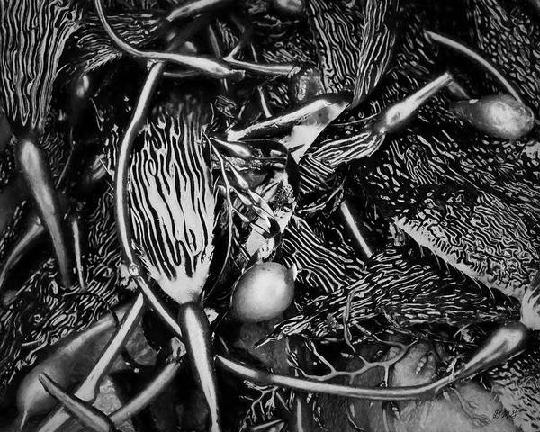 Photograph - Kelp V Bw by David Gordon