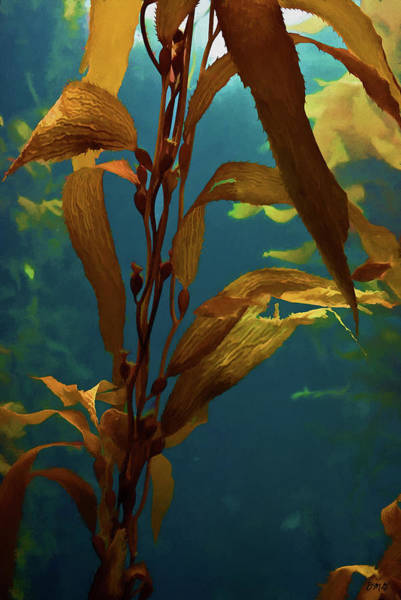 Photograph - Kelp Vi  by David Gordon