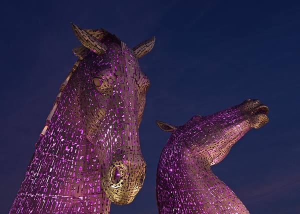 Photograph - Kelpies by Stephen Taylor