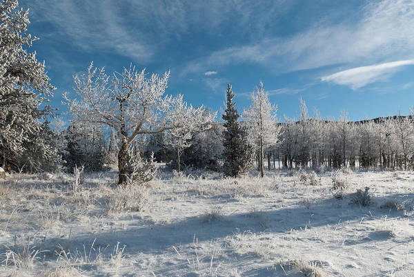 Photograph - Kenosha Pass Blue And White Winter Landscape by Cascade Colors