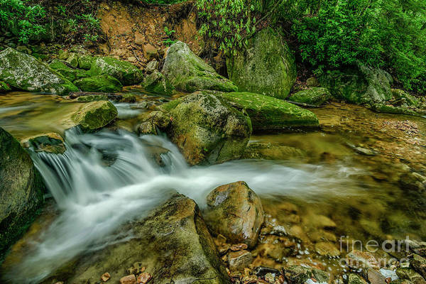 Photograph - Kens Creek In Cranberry Wilderness by Thomas R Fletcher