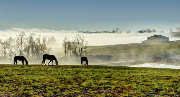 Photograph - Kentucky Bluegrass Morning #1 by Sam Davis Johnson