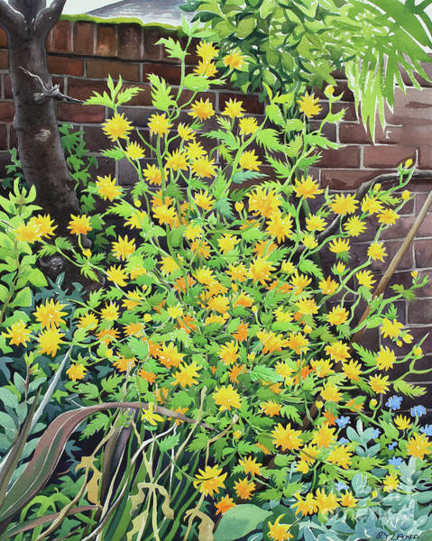 Golden Bloom Painting - Kerria Japonica by Christopher Ryland