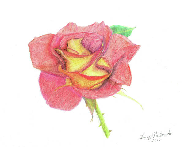 Drawing - Ketchup And Mustard Rose by Terry Frederick