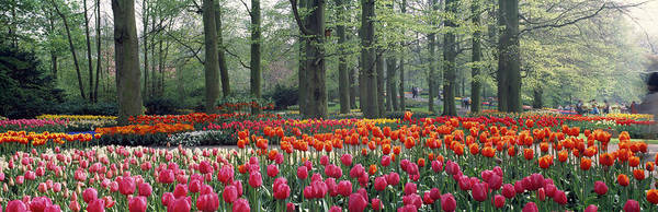 Keukenhof Wall Art - Photograph - Keukenhof Garden, Lisse, The Netherlands by Panoramic Images
