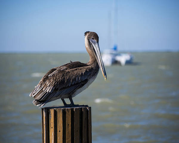 Photograph - Key Largo Florida Pelican Yacht by Toby McGuire