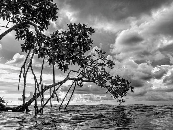 Photograph - Key Largo Mangroves by Louise Lindsay