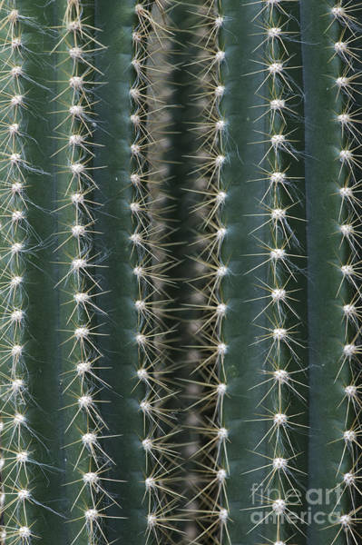 Wall Art - Photograph - Key Tree Cactus by Tim Gainey