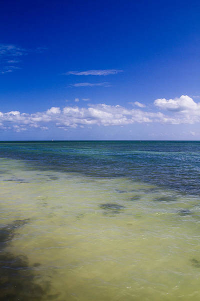Photograph - Key West Blue Skies by Bob Slitzan