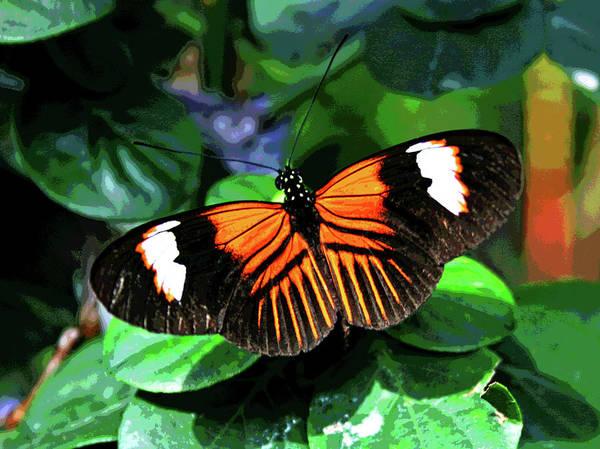 Photograph - Key West Butterfly 1 by Larry Oskin