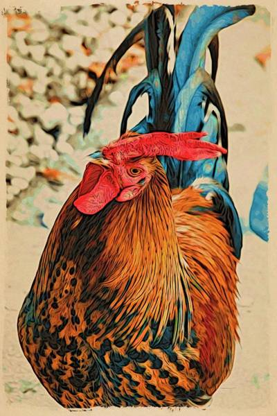 Photograph - Key West Cock A Doodle Morning by Alice Gipson