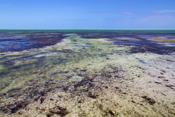 Photograph - Key West Low Tide by Bob Slitzan