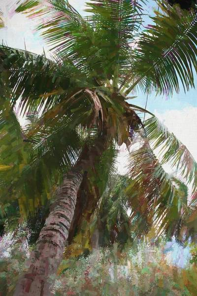 Photograph - Key West Palm by Alice Gipson