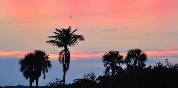 Photograph - Key West Skies by Bill Cannon