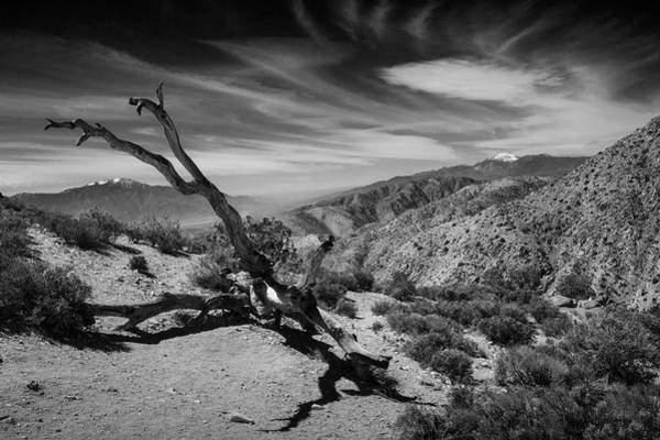Photograph - Keys View In Joshua Tree National Park by Randall Nyhof