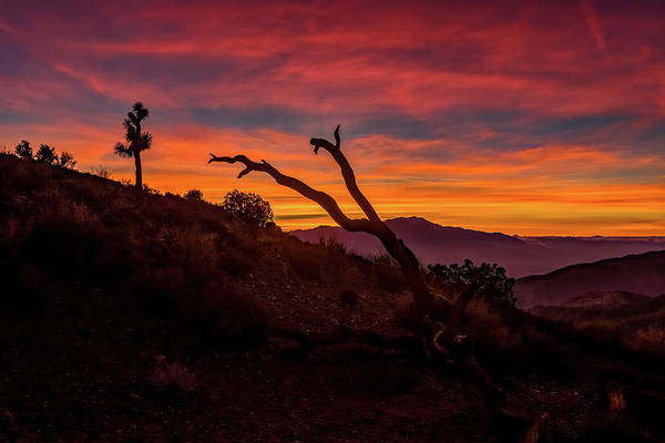 Yucca Plants Photograph - Keys View by Peter Tellone
