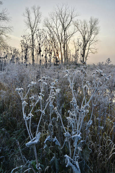 Photograph - Keystone Landing Frosty Morning In Glacial Park by Ray Mathis