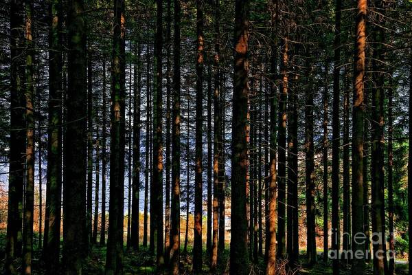 Photograph - Kielder Forest And Kielder Water by Martyn Arnold