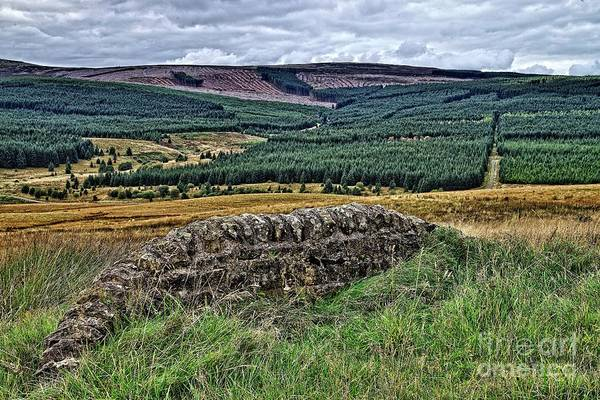 Photograph - Kielder Forest Northumberland by Martyn Arnold