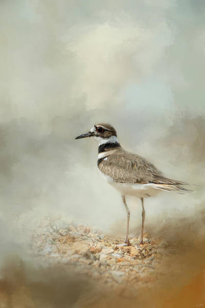 Photograph - Killdeer On The Rocks by Jai Johnson