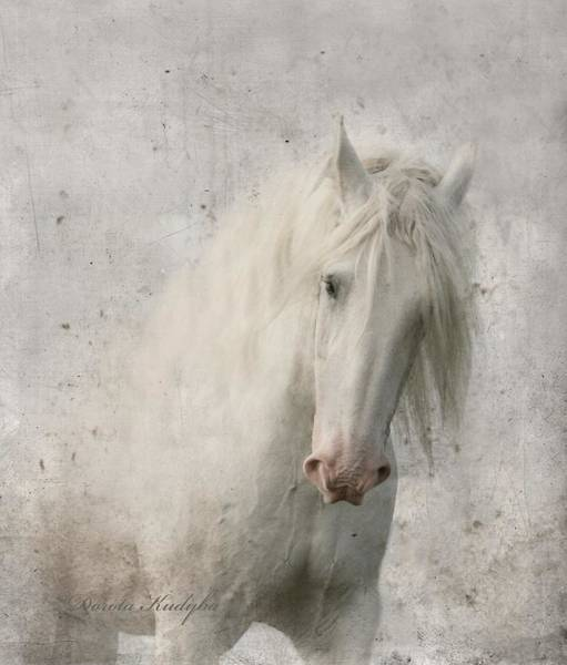 Beautiful Horse Wall Art - Photograph - Kindness by Dorota Kudyba