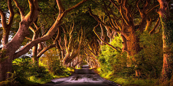 Photograph - Kinds Road by Ryan Smith
