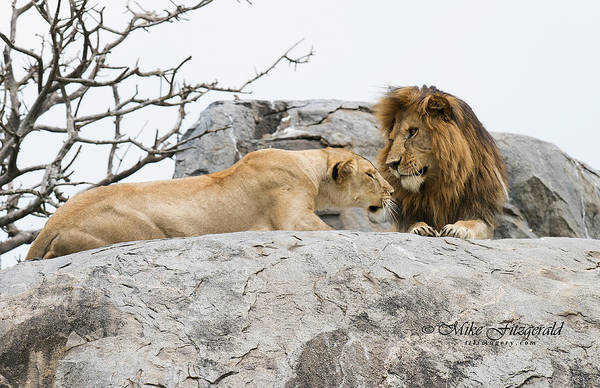 Photograph - King And Queen by Mike Fitzgerald
