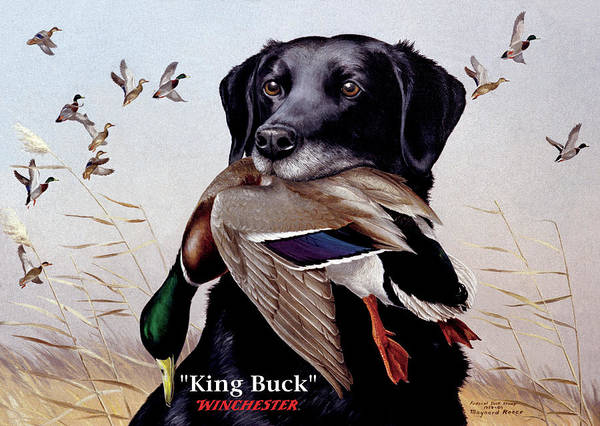 Wall Art - Painting - King Buck - 1959-60 Federal Migratory Waterfowl Stamp Artwork by Maynard Reece