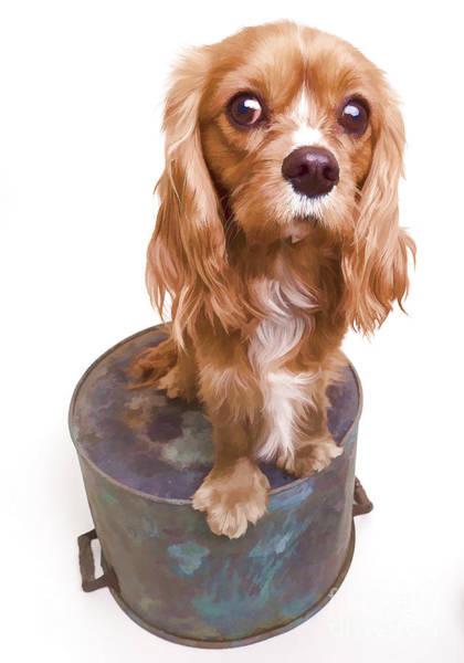 Digital Effect Photograph - King Charles Spaniel Puppy by Edward Fielding