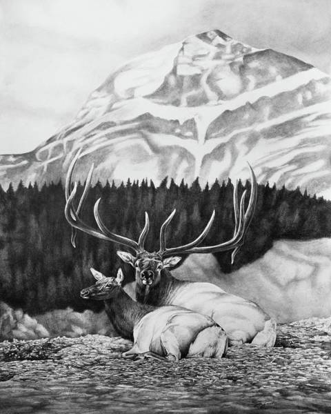 Elk Mountain Drawing - King by Lydia Smith