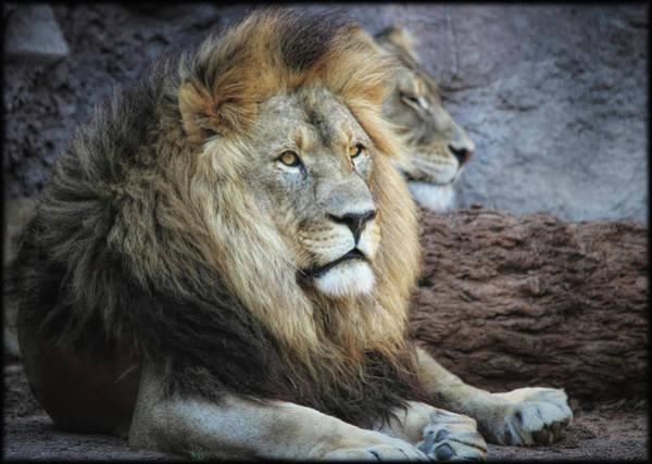 Photograph - King N Queen by Elaine Malott