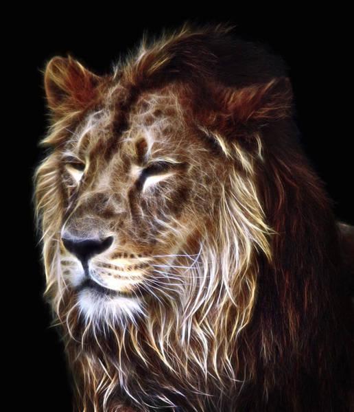 Wall Art - Digital Art - King Of Beasts The Lion by Daniel Hagerman