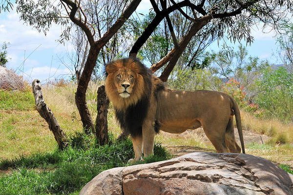 Photograph - King Of His Domain by Howard Bagley