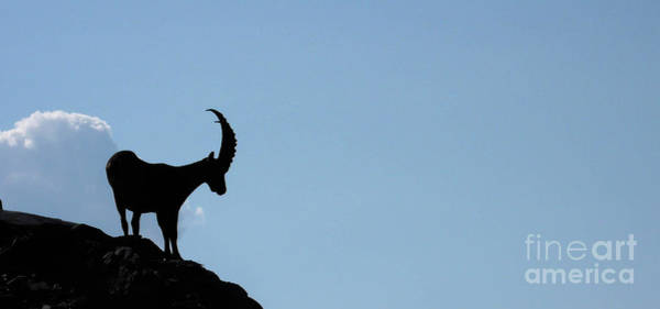 Ibex Wall Art - Photograph - King Of The Alps by DiFigiano Photography