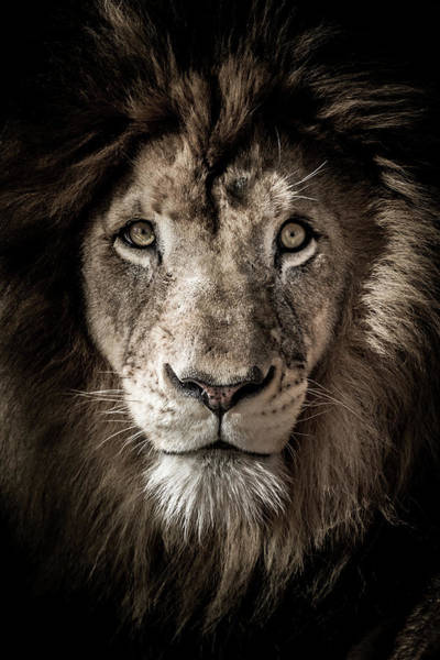 Photograph - King Of The Jungle by Ron Pate