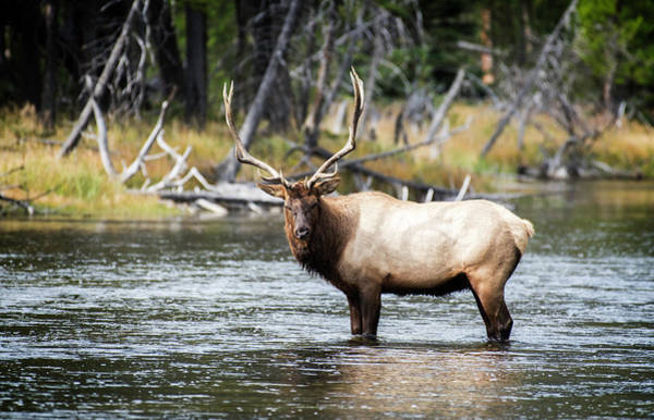Photograph - King Of The River by Scott Read