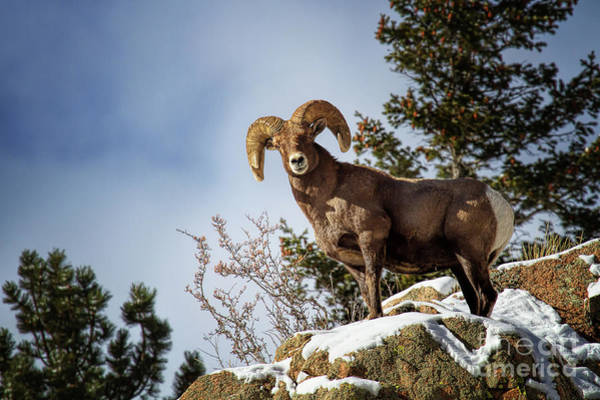 Photograph - King On The Mountain by Jim Garrison