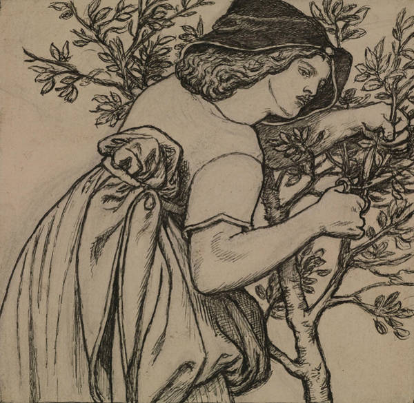 Drawing - King Rene's Honeymoon  by Dante Gabriel Rossetti