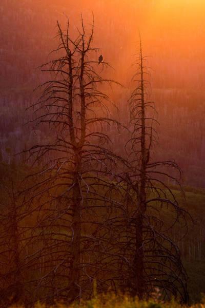 Photograph - Kingdom by Dustin  LeFevre