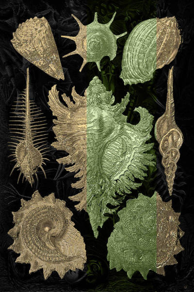 Horseshoe Digital Art - Kingdom Of Golden Seashells by Serge Averbukh