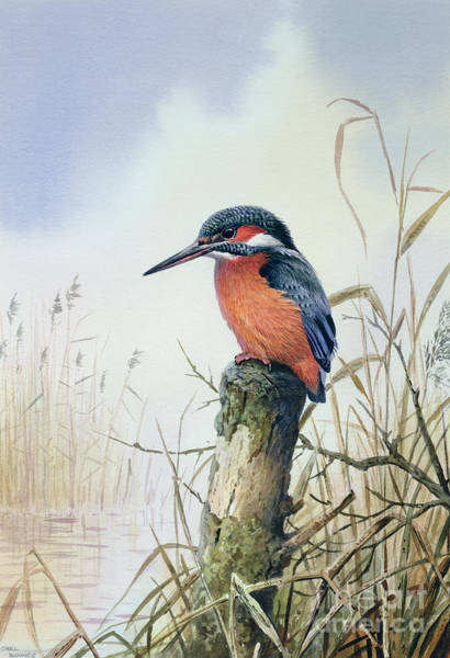 Stump Painting - Kingfisher by Carl Donner