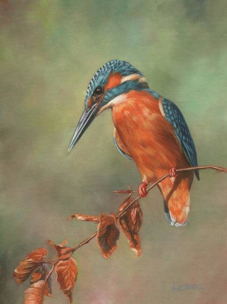 Painting - Kingfisher Perched by David Stribbling