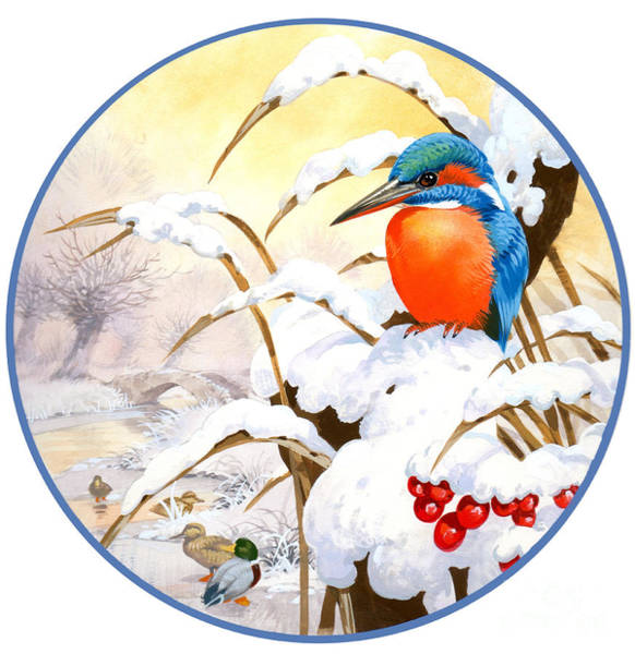 Francis Painting - Kingfisher Plate by MGL Meiklejohn Graphics Licensing